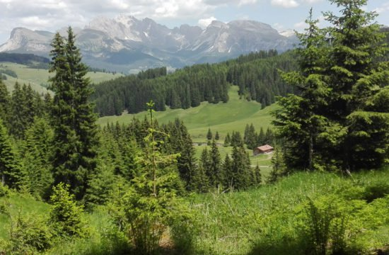 alpine-vecation-alpe-di-siusi-south-tirol-02