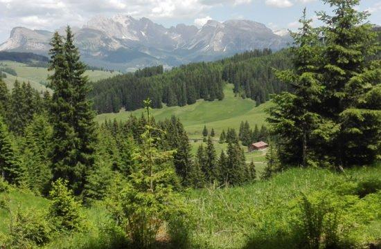 vacanza-alpina-nella-baita-alto-adige-02